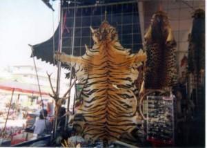 DN_Tiger_Skin