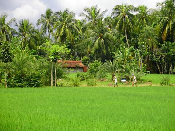 DN-village